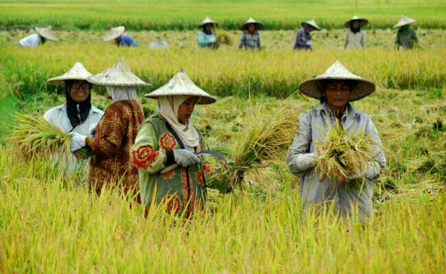 Pertanian Mesti Jadi Pusat Aktivitas Ekonomi Nasional Mata Nurani